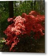 Rhododendron Metal Print