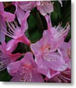 Rhododendron In The Pink Metal Print