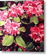 Rhododendrons Rothschild Metal Print