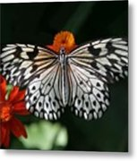Rice Paper Butterfly Metal Print