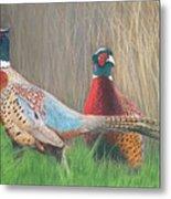 Ring-necked Pheasants Metal Print