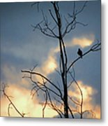 Robin Watching Sunset After The Storm Metal Print
