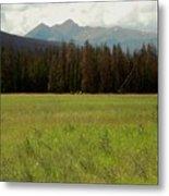Rocky Mountain Elk Metal Print