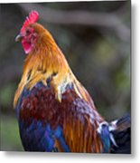 Rooster Rooster Metal Print by Mike  Dawson