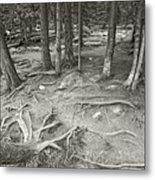 Roots Metal Print