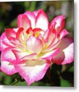 Rose Art Prints Pink White Roses Garden Baslee Troutman Metal Print