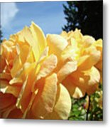 Rose Garden Yellow Peach Orange Roses Flowers 3 Botanical Art Baslee Troutman Metal Print