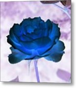 Rose In Full Bluem Metal Print