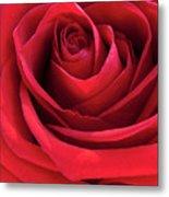 Rose Macro Metal Print
