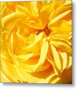 Rose Spiral Flower Garden Baslee Troutman Metal Print