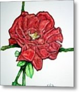 Rose Study No 1 Metal Print