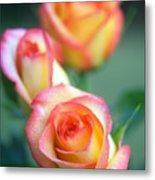 Rose Trio Metal Print