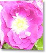 Rosegarden No. 24 Metal Print