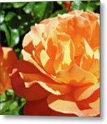 Roses Art Prints Orange Rose Flower 11 Giclee Prints Baslee Troutman Metal Print