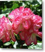 Roses Bouquet Pink White Rose Flowers 2 Rose Garden Baslee Troutman Metal Print