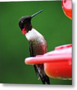 Ruby Red Throated Hummingbird On Feeder Metal Print
