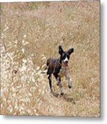 Run Puppy Run Metal Print