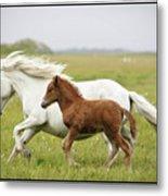 Running Horses.... Metal Print by Gigja Einarsdottir