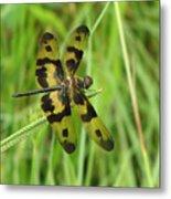 Ryothemis Dragonfly Metal Print