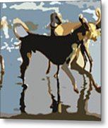 Salukis On The Beach Metal Print