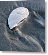 Sanddollar Metal Print