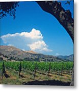 Santa Ynez Vineyard View Metal Print