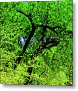 Sapes In Nature Metal Print