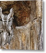 Screech Owl In Hole Metal Print