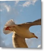 Sea Birds 9 Metal Print