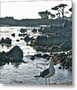 Sea Gull Metal Print