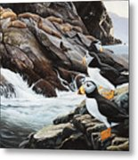 Sea Lion Island-puffins Metal Print