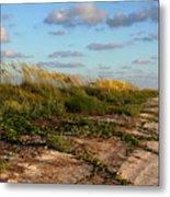 Sea Oats Along The Beach Metal Print