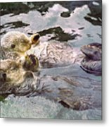 Sea Otters Holding Hands Metal Print