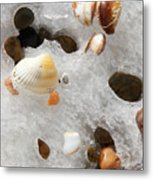 Sea Shells Rocks And Ice Metal Print