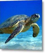 Sea Turtle Blue Metal Print