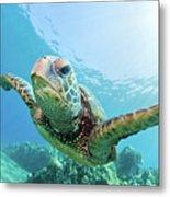 Sea Turtle, Hawaii Metal Print