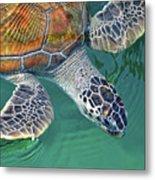 Sea Turtle Metal Print by Thank you.
