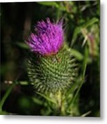 Seacoast Wildflower I Metal Print