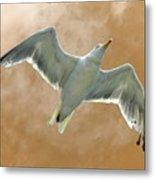 Seagull In Flight 1 Metal Print