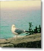 Seagull On Stone Wall Metal Print