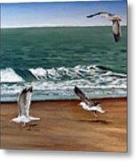 Seagulls 2 Metal Print