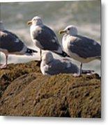 Seaguls Metal Print