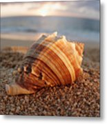 Seashell In The Sand Metal Print