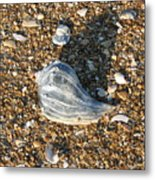 Seashells On The Seashore Metal Print