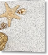 Seastar And Shells Metal Print by Joana Kruse