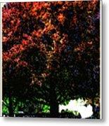 Seattle Chateau Ste Michelle Tree Metal Print