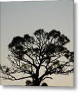 Senset Trees Metal Print