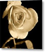 Sepia Antique Rose Metal Print by M K  Miller
