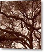 Sepia Branch Burst Metal Print