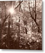 Sepia Forest Metal Print
